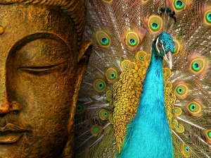 peacock with Buddha