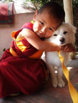 Tibetan_monk_dog